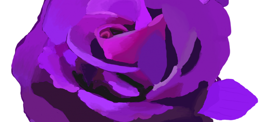 Drawing of a Purple Rose